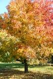 Красочное плоское дерево Стоковая Фотография RF