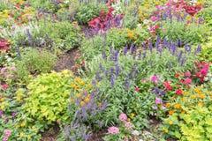 Красочное разнообразие flowerbed impatiens/бальзаминовые тропического f Стоковые Фото