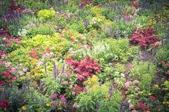 Красочное разнообразие flowerbed impatiens/бальзаминовые тропического f Стоковая Фотография