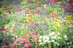 Красочное разнообразие flowerbed impatiens/бальзаминовые тропического f Стоковое Изображение