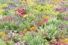 Красочное разнообразие flowerbed impatiens/бальзаминовые тропического f Стоковое фото RF