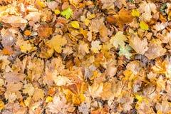 Красочное расположение 10 листьев осени Стоковые Фотографии RF