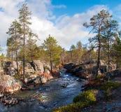 Красочное река осени в скалистых древесинах Стоковые Фотографии RF
