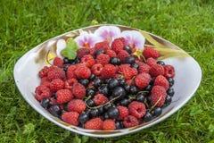 Красочное смешивание свежих ягод закрывает Стоковые Изображения