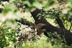 Красочное украшение на дереве дуба стоковая фотография rf