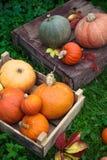 Красочное украшение осени разнообразий тыкв и сквошей Стоковые Фотографии RF