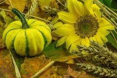 Красочное украшение осени с тыквой Стоковые Изображения RF