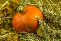 Красочное украшение осени с тыквой Стоковое фото RF
