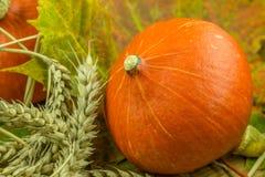 Красочное украшение осени с тыквой Стоковая Фотография