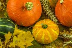 Красочное украшение осени с тыквой Стоковое Изображение RF