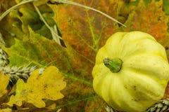 Красочное украшение осени с тыквой Стоковая Фотография RF