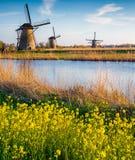 Красочное утро весны на канале в Нидерландах стоковое изображение rf