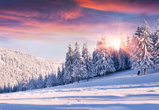 Красочное утро зимы в прикарпатских горах. Стоковые Изображения