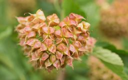 Красочное цветение сделанное ягод стоковое изображение