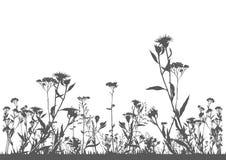 Красочное цветковое растение Стоковые Фотографии RF