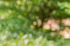 Красочное bokeh искры и дуновения естественное дерева для романтичной задней части Стоковая Фотография