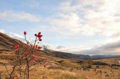 Красочное nz сельской местности. Стоковые Фото