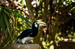 Красочное Toucan сидя на ветви в тропическом лесе стоковые фотографии rf