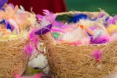 Красочно покрашенные пер птицы в сплетенных корзинах Стоковое фото RF