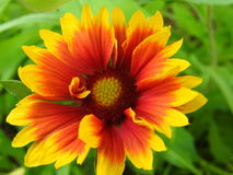 Красочно цветок Стоковое Изображение RF