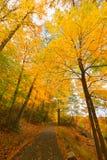 Красочные ландшафты пейзажа падения стоковая фотография