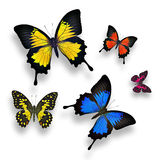 Красочные бабочки Стоковое Изображение RF