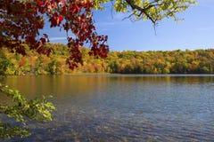 Красочные ветви обрамляют пруд в осени, Нью-Гэмпшир Рассела Стоковое фото RF