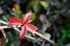 Красочные всход и лист детенышей Стоковые Фотографии RF