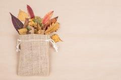 Красочные высушенные листья осени Стоковое Изображение