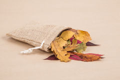 Красочные высушенные листья осени Стоковые Фото