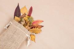 Красочные высушенные листья осени Стоковое Изображение RF