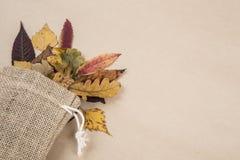 Красочные высушенные листья осени Стоковая Фотография