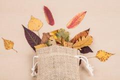 Красочные высушенные листья осени Стоковые Фотографии RF