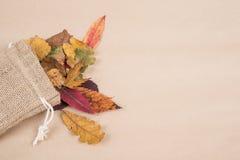 Красочные высушенные листья осени Стоковое фото RF