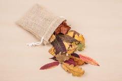 Красочные высушенные листья осени Стоковые Изображения RF