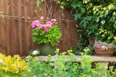Красочные в горшке заводы в угле сада Стоковые Фото