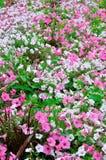 Красочные городские цветки Стоковое Изображение