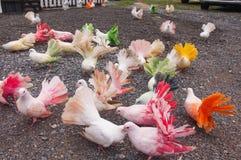 Красочные голуби в зоопарке Стоковое Изображение