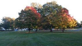 Красочные деревья осени в Вирджинии стоковые фотографии rf