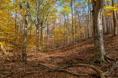 Красочные деревья осени в лесе стоковые изображения rf