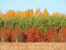 Красочные деревья осени, Литва Стоковая Фотография