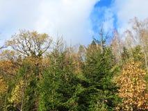 Красочные деревья осени, Литва Стоковые Изображения
