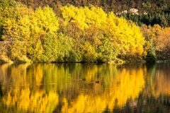 Красочные деревья отразили в озере в осени стоковое изображение