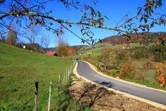 Красочные деревья вдоль дороги в осени Стоковые Фотографии RF