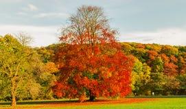 Красочные деревья в сезоне осени стоковые изображения rf