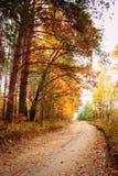Красочные деревья осени в лесе Стоковые Фото