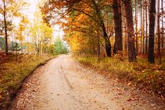 Красочные деревья осени в лесе Стоковое Изображение RF