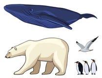 Красочные ледовитые установленные животные Стоковые Фото
