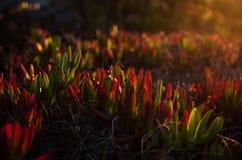 Красочные заводы в лучах восходящего солнца Стоковое фото RF