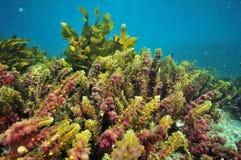 Красочные засорители Тихого океана Стоковые Изображения RF